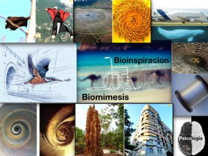BioInspiracion BioMimesis